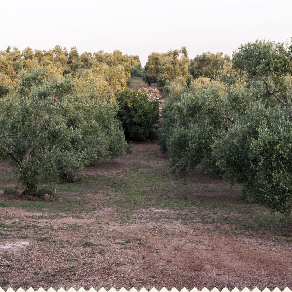 Terre D'Oria_Sito Web_Bozza